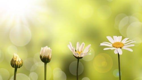 Blumensprache gestern und heute