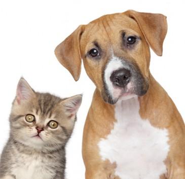 Katze, Hund, Tiere