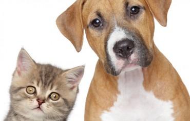 """Gewinnen Sie """"Hunde"""" und """"Katzen"""" für sich"""