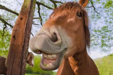 Lachen, Humor, Humor ist, wenn man trotzdem lacht?