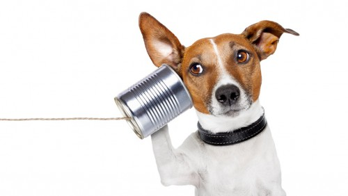 Lustige Telefonkonferenzen