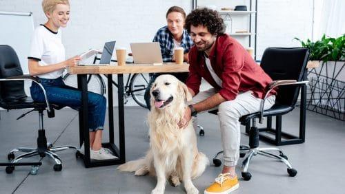 Der Hund im Büro